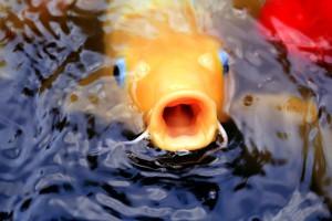 fish-1059268_1280